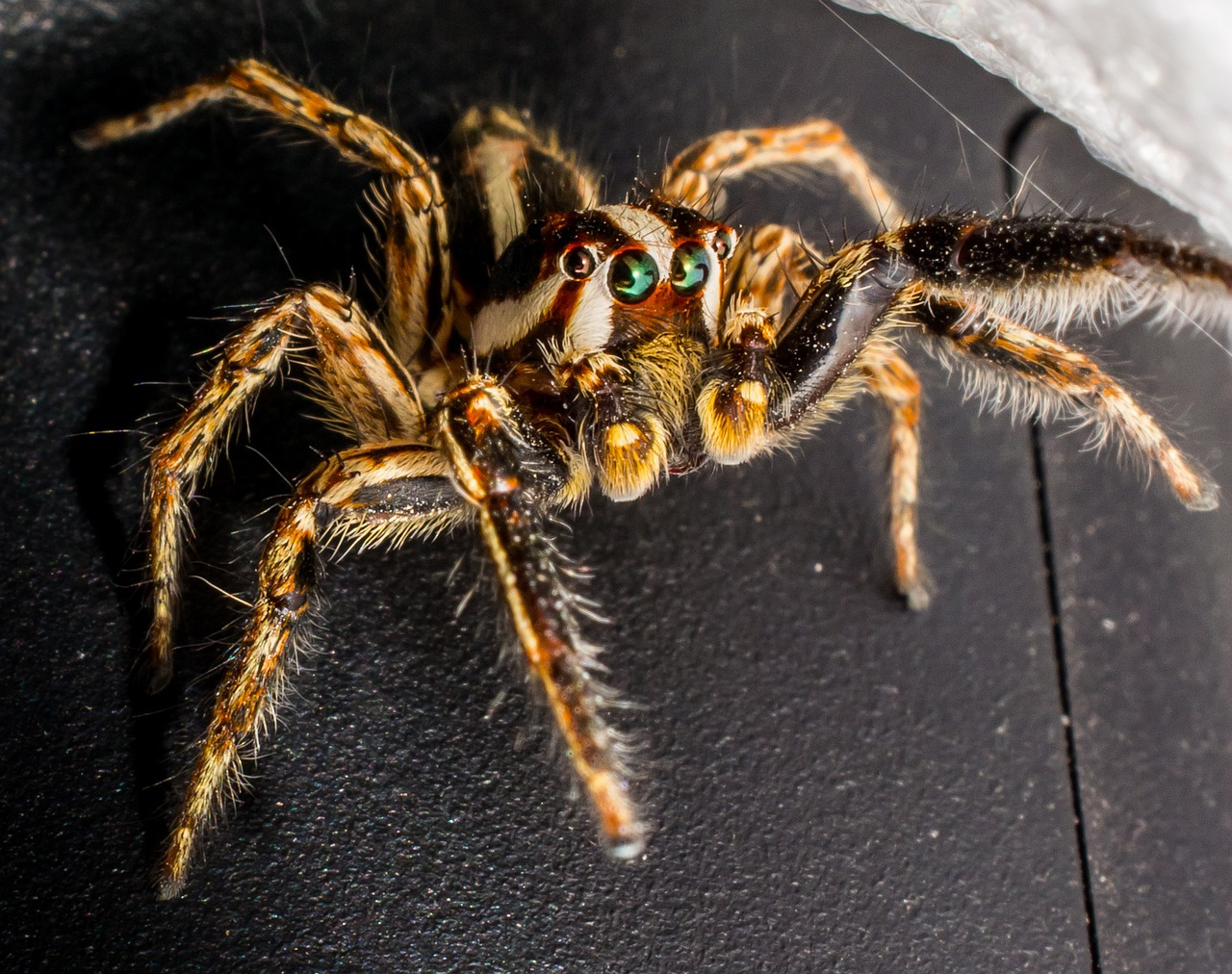 Именем азамат, прикольная картинка паука
