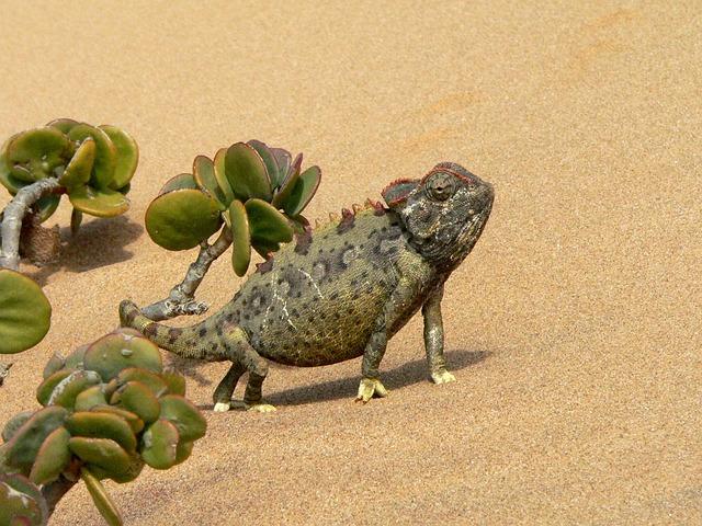 Chameleon Reptile Animal 183 Free Photo On Pixabay