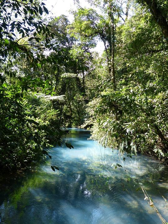 Jungle, Arbre, L'Amérique Centrale, Tropical, Vert