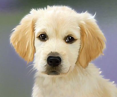 Painting Dog Golden Retriver Face Trusting