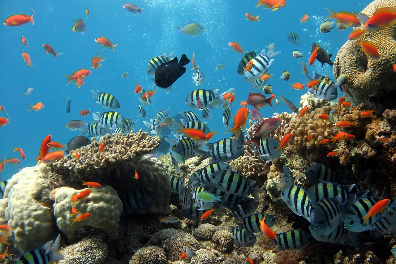 Best Fish Tanks In 2020