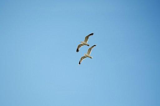 Vogel, Möwe, Tier, Wasservogel, Meer