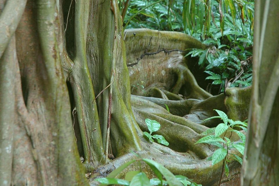 Główny, Dżungla, Belize, Drzewo, Organiczne, Rolnictwo