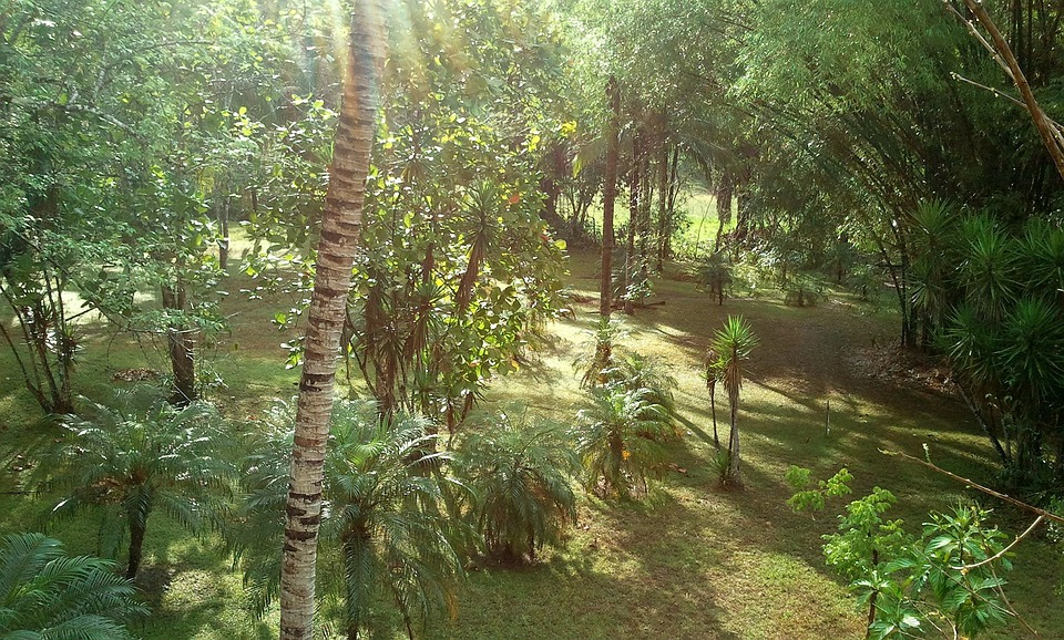 Bambus, Dżungla, Belize, Krajobraz, Sceneria