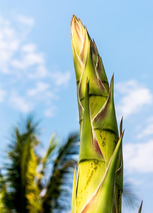 Racine De L Agave Fleur D Agave Photo Gratuite Sur Pixabay