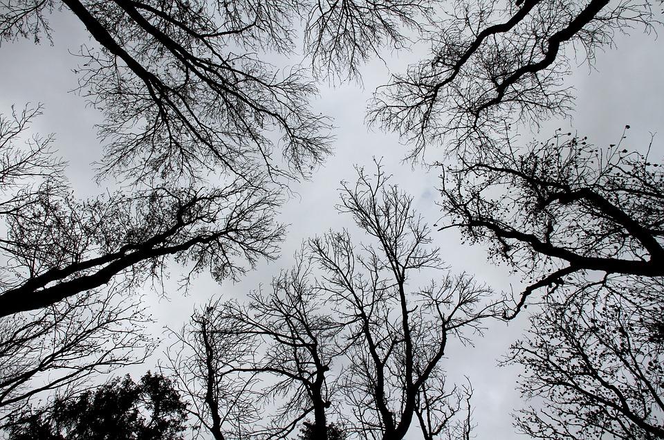 Árvores, Silhuetas, Preto E Branco
