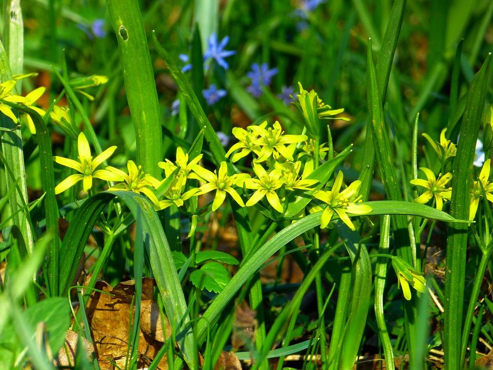 Yellow star gold flower free photo on pixabay yellow star gold star flower yellow blossom bloom mightylinksfo
