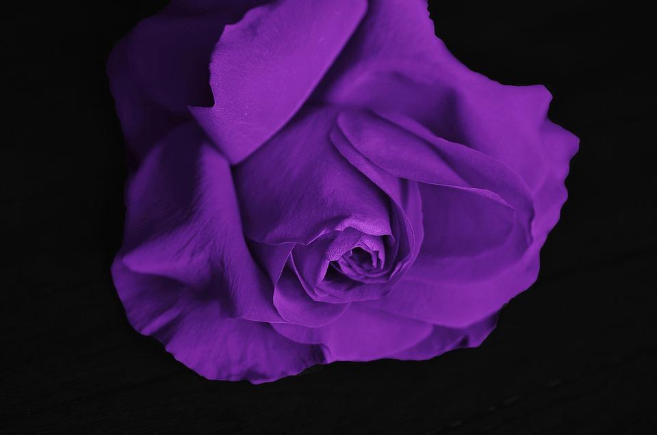 romantic  free images on pixabay, Beautiful flower