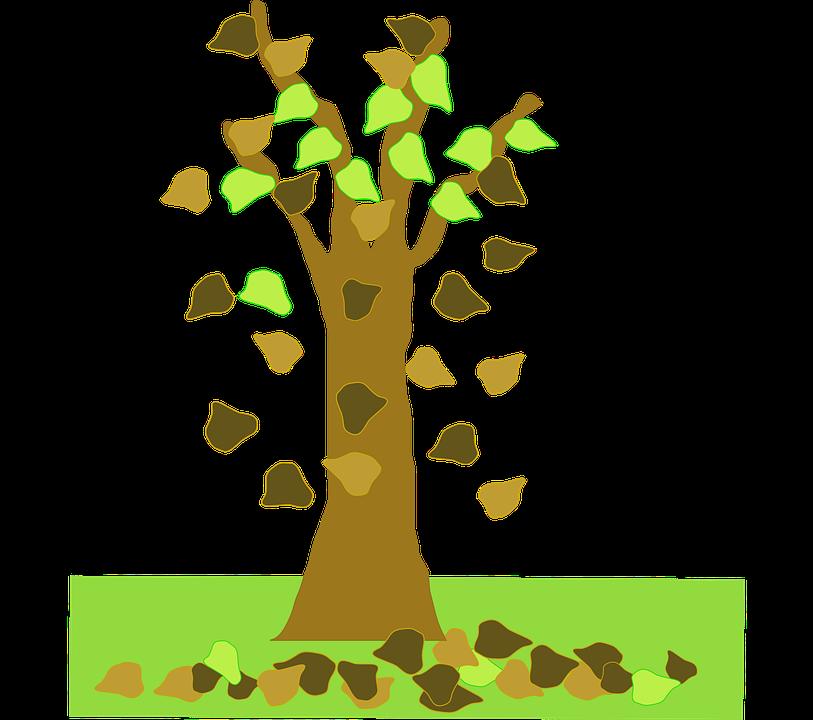 Vector gratis rbol oto o planta imagen gratis en for Arboles que no se le caen las hojas en invierno