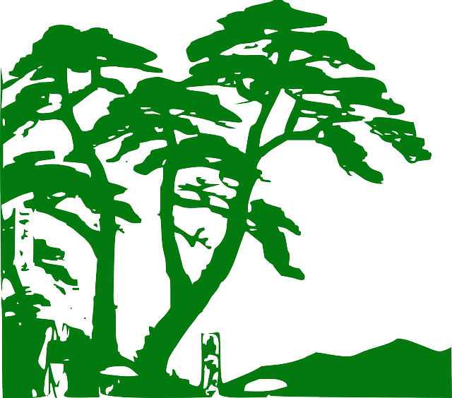 Rainforest Vegetation Trees · Free vector graphic on Pixabay