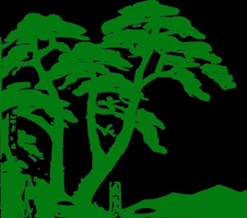rainforest vegetation trees free vector graphic on pixabay rh pixabay com free jungle book clip art free jungle animal clip art download