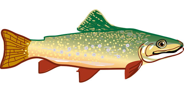 Trout fish rainbow free vector graphic on pixabay - Dessin truite ...