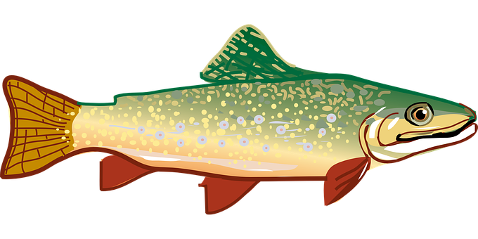 Trout, Fish, Rainbow Trout, Animal, Icon