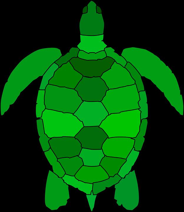 Kaplumbağa Hayvan Sürüngen Pixabayda ücretsiz Vektör Grafik