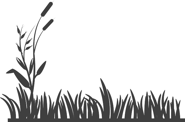 flowers grass silhouette  u00b7 free vector graphic on pixabay