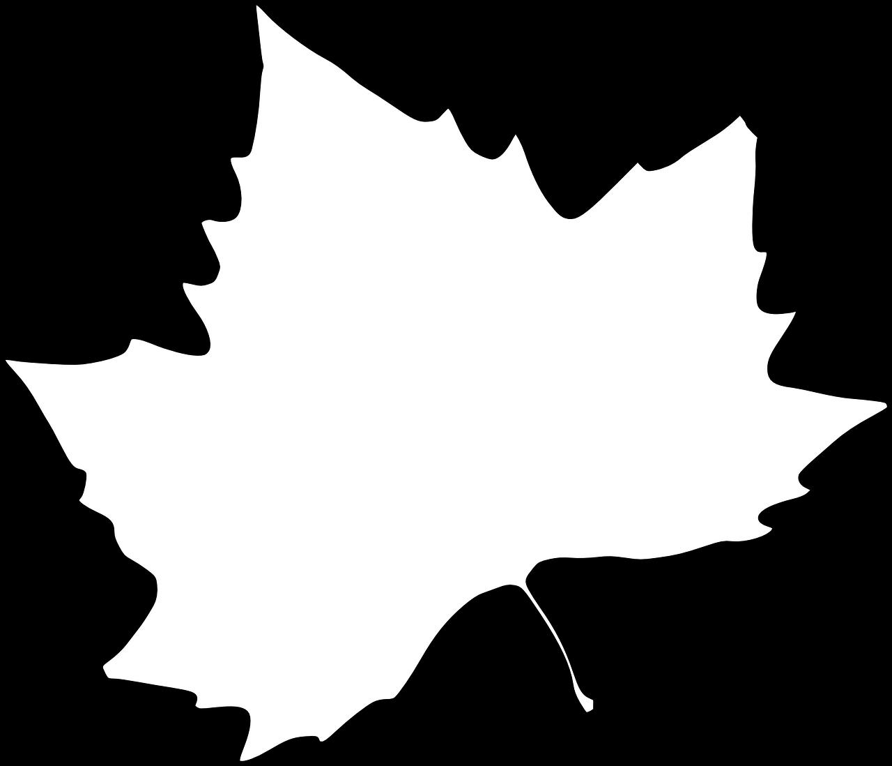 Картинки контура кленового листа