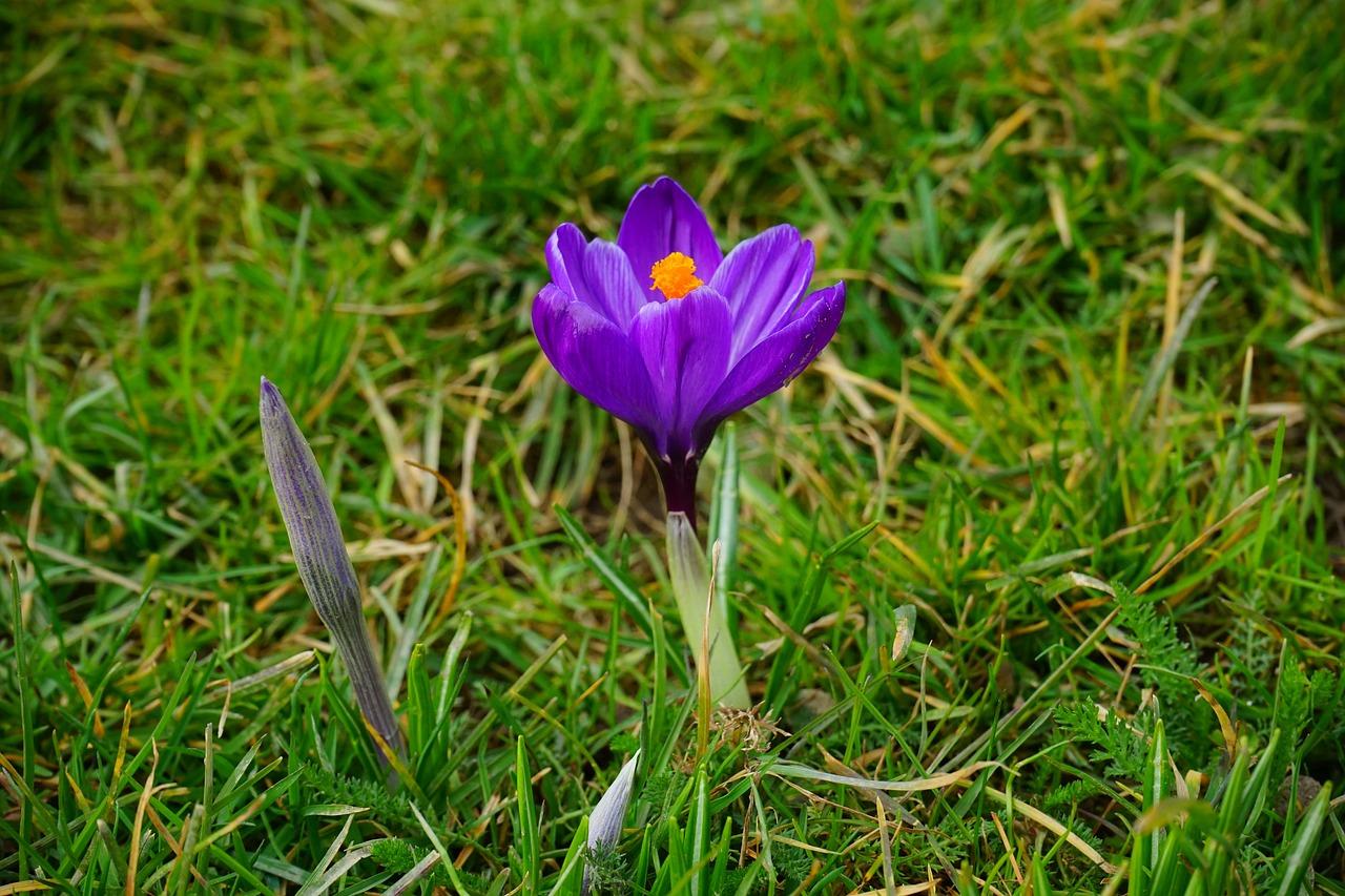Расцветающий цветок картинка