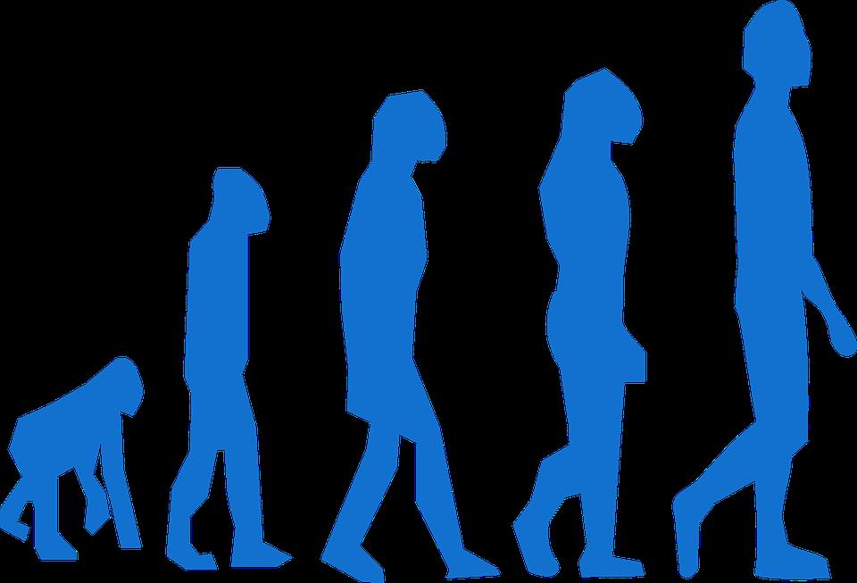 Evolution, Monkey, Man, Transition, Neanderthaler