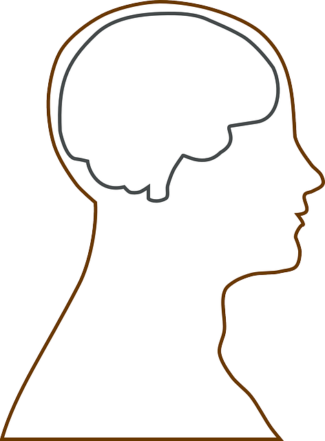 brain head science 183 free vector graphic on pixabay