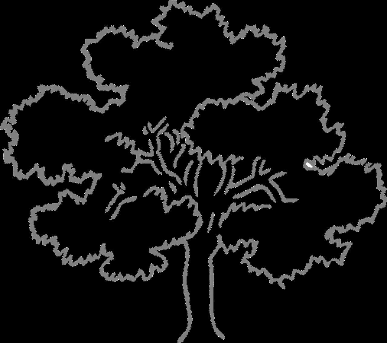 Red Oak Tree Stock Images RoyaltyFree Images amp Vectors
