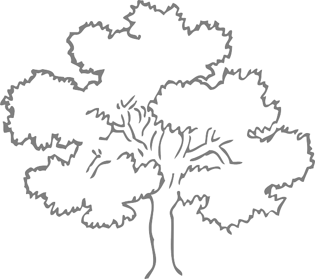 Oak Tree Grey Free Vector Graphic On Pixabay