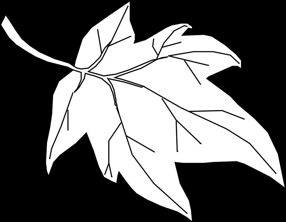 Maple, Leaf, Outline, Tree, Nature