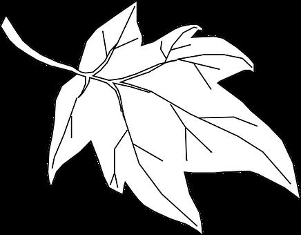 Maple Leaf Outline Tree Nature Leaf L