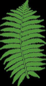 Bracken, Fern, Plant, Leaf, Leaves
