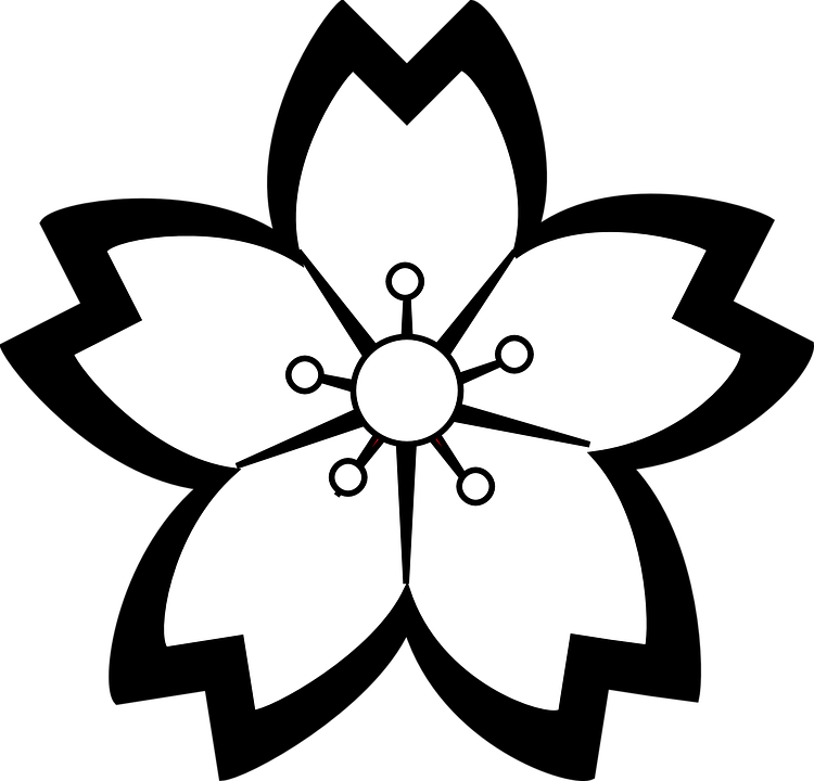 Lily Flower Blossom , Free vector graphic on Pixabay
