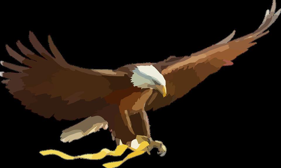 Águila Calva Ave De Presa · Gráficos vectoriales gratis en Pixabay