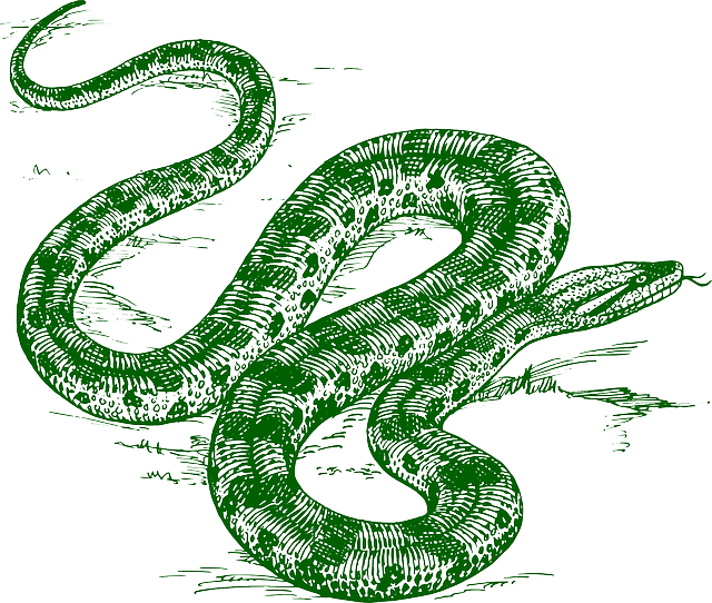Anaconda art