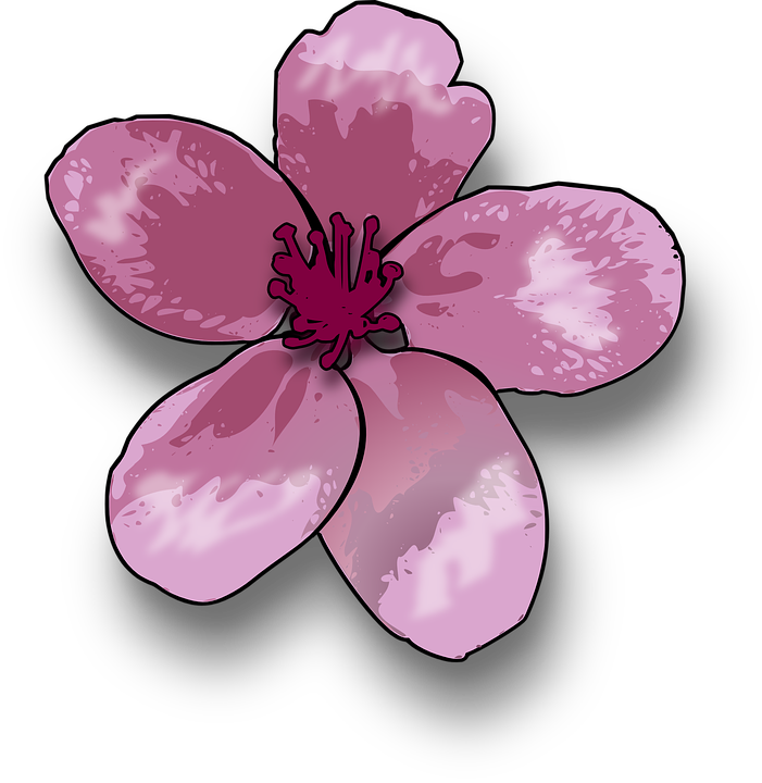 Free vector graphic: Lily, Blossom, Pink, Violet, Lilac - Free ...