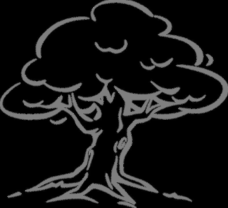 Silver Oak Oak Tree Oak Tree 297713