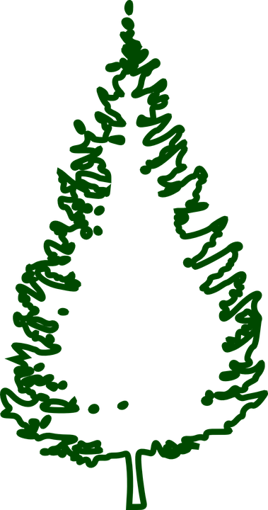 Fir Tree Conifer · Free vector graphic on Pixabay