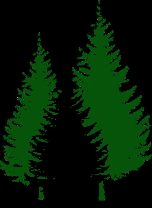 Fir Trees, Forest, Conifers, Fir, Evergreen, Three