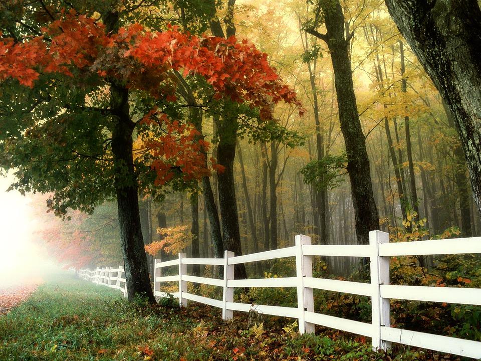 Осень - самое уютное время года - Страница 2 Early-morning-299735_960_720