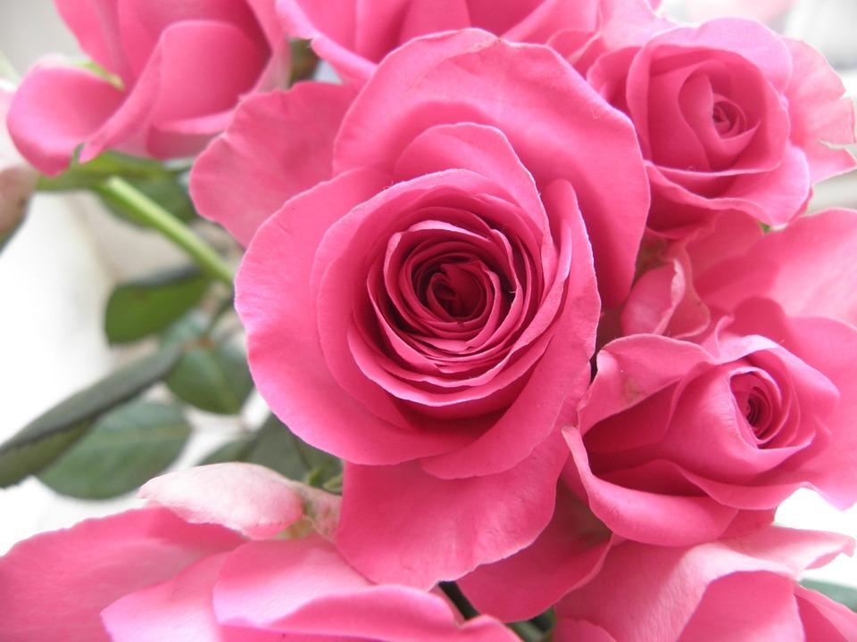 Rosas Flores Rosa Foto Gratis En Pixabay