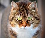 kot, zwierzę, pieścić