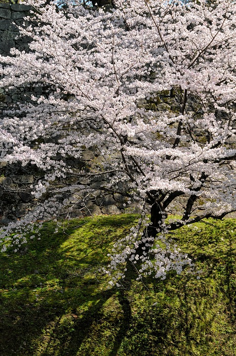 九寨沟景区85%景观迎客双龙海瀑布首亮相