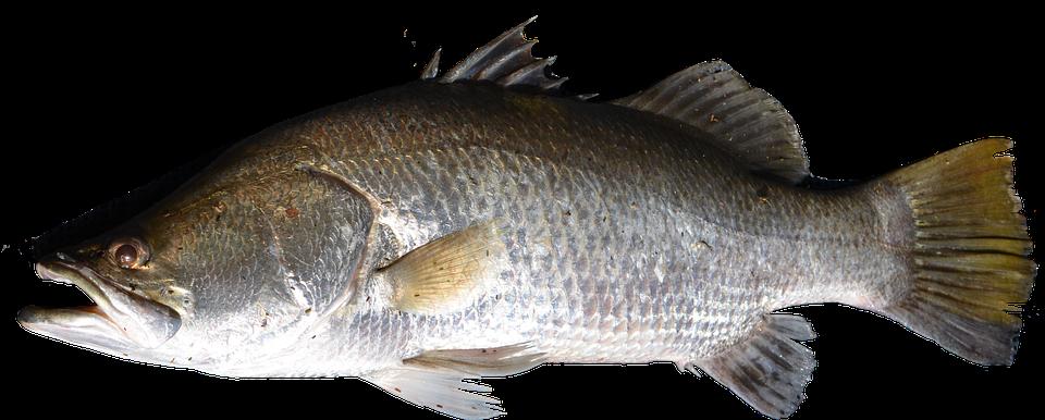 Isol poisson poissons photo gratuite sur pixabay - Poisson d avril images gratuites ...