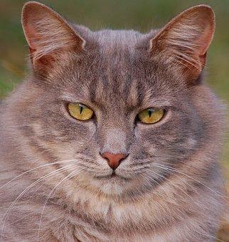 Katze, Katzen, Haustier, Kätzchen
