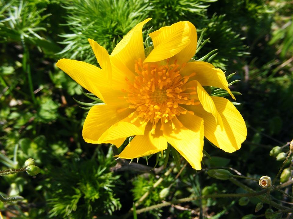Fiori Selvatici Gialli.Fiori Selvatici Fiore Giallo Foto Gratis Su Pixabay