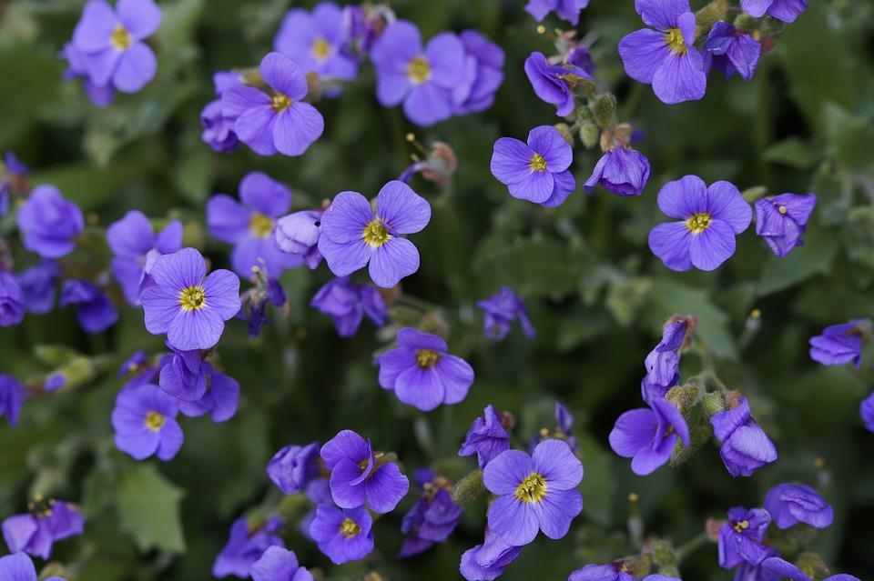 Cuscino Blu Fiori Viola Foto Gratis Su Pixabay