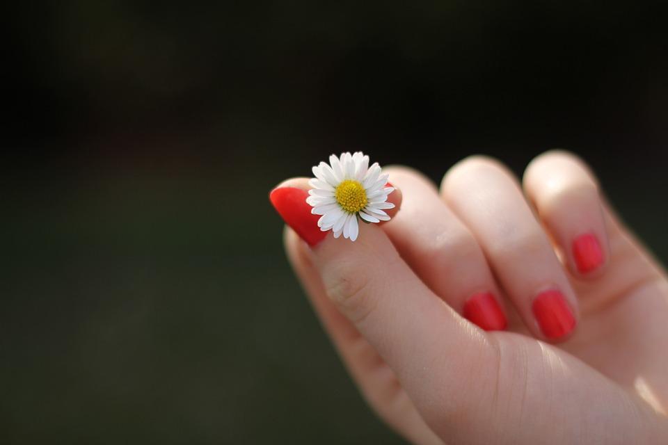 Mão, Margarida, Flor, Dedo, Unhas, Lacado, Doce, Amor
