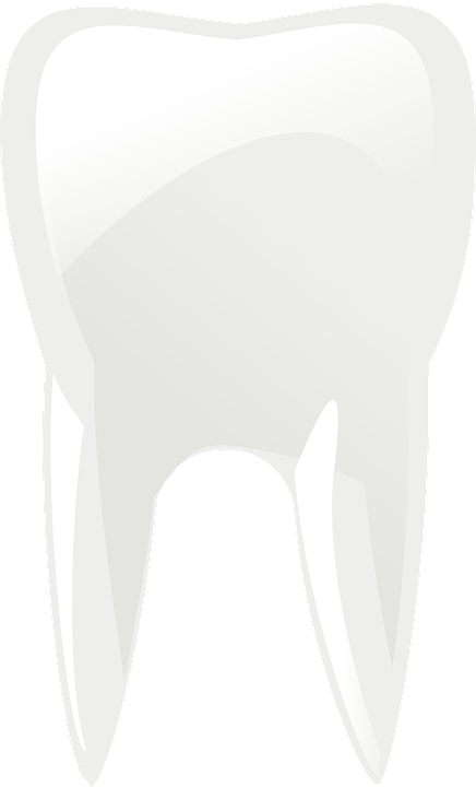 Free vector graphic: Molar, Teeth, Tooth, Dental Care - Free Image ...