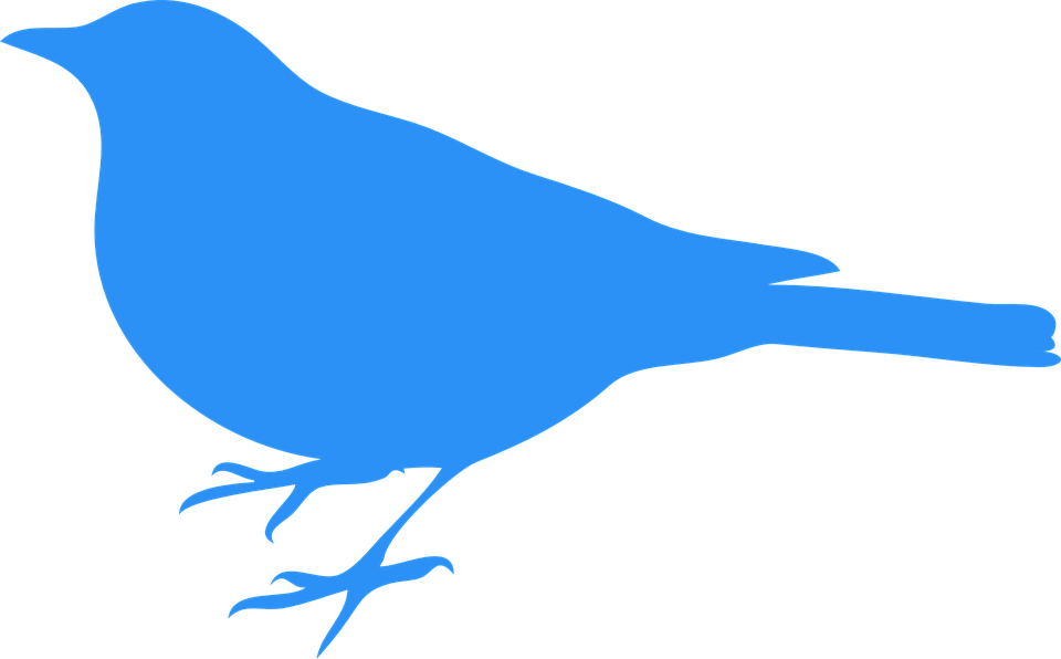 bluebird bird animal free vector graphic on pixabay rh pixabay com Bluebird Drawing Free Bird Clip Art