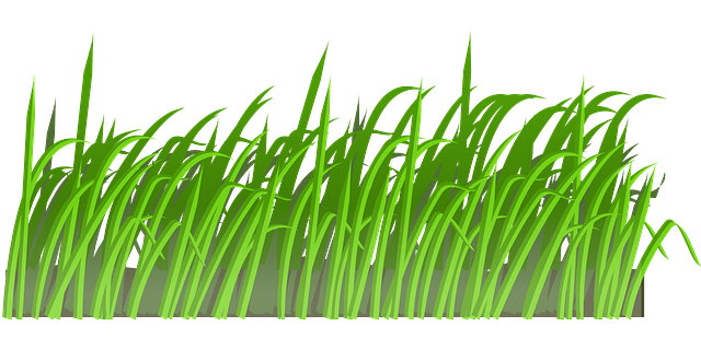 grass lawn green  u00b7 free vector graphic on pixabay