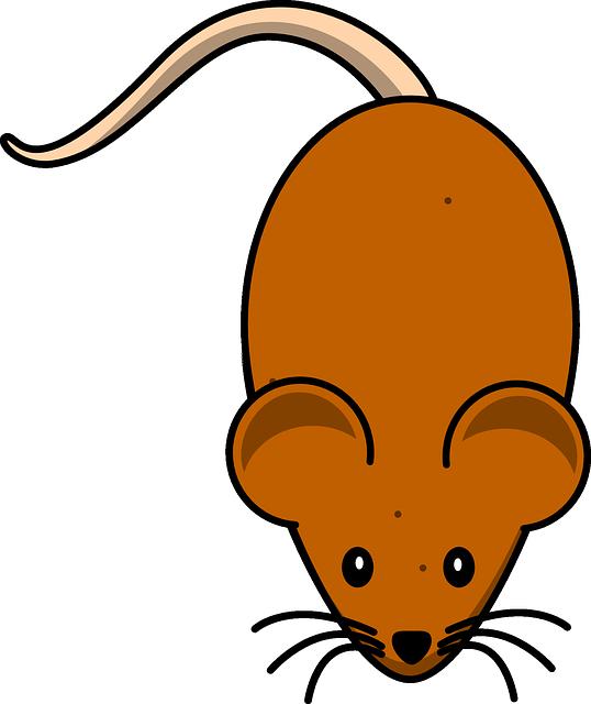 Изображение мыши картинка