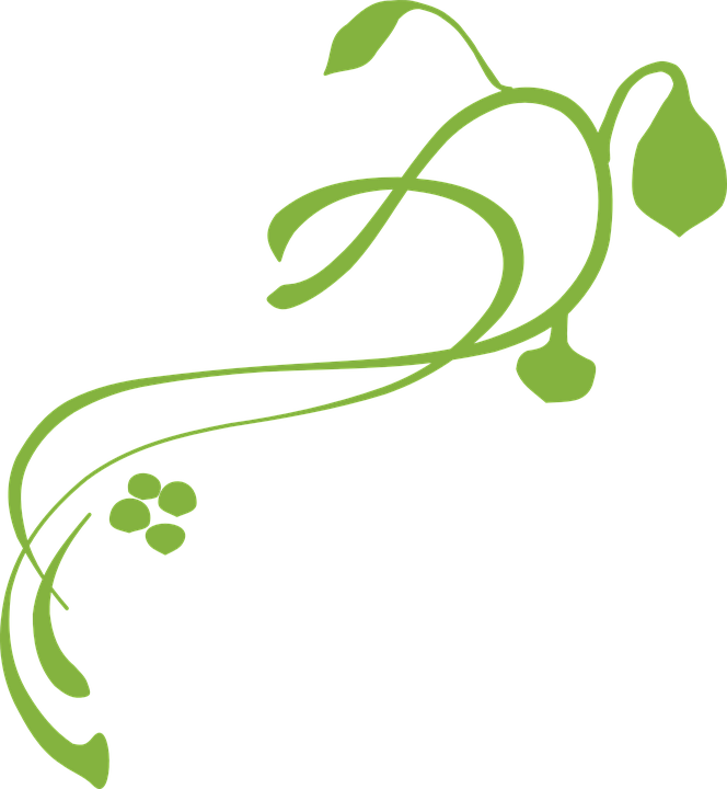 Vine decoration green free vector graphic on pixabay vine decoration green plant design floral altavistaventures Images
