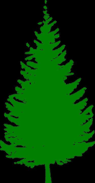 Free vector graphic: Evergreen, Pine, Green, Fir Tree ...